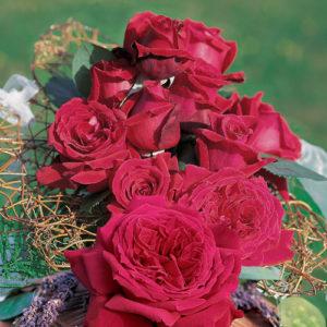 Vrtnarstvo Breskvar vrtnica Duftfestival