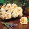 Vrtnarstvo Breskvar vrtnica Paul Ricard