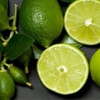 Vrtnarstvo Breskvar - Citrus aurantifolia Messicana