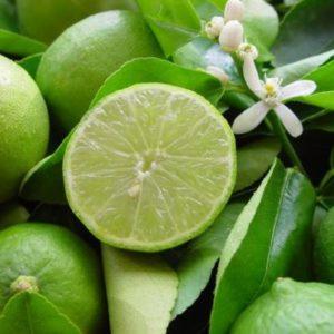 Vrtnarstvo Breskvar - Citrus Latifolia Tahiti