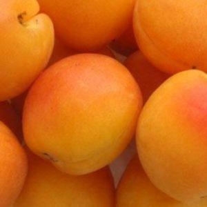 Vrtnarstvo Breskvar - Prunus armeniaca Tyrinthos