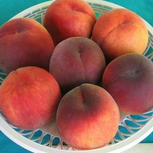 Vrtnarstvo Breskvar - Prunus persica Norman