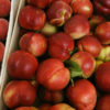 Vrtnarstvo Breskvar - Prunus persica nucipersica Alice Col