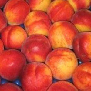 Vrtnarstvo Breskvar - Prunus persica nucipersica Venus