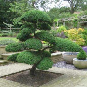 Vrtnarstvo Breskvar - Juniperus