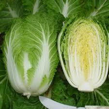 Vrtnarstvo Breskvar - Brassica pekinensis Yuki F1