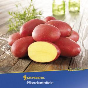 Vrtnarstvo Breskvar - Solanum tuberosum Laura Bio