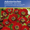 Vrtnarstvo Breskvar - Adonis Aestivalis