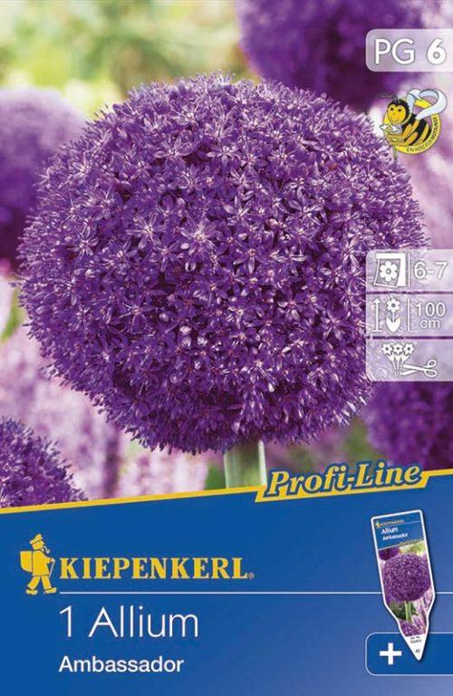 Vrtnarstvo Breskvar - Allium Ambassador