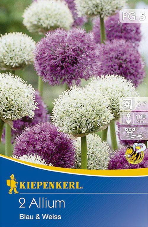 Vrtnarstvo Breskvar - Allium Blau und Weiss