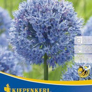 Vrtnarstvo Breskvar - Allium caeruleum