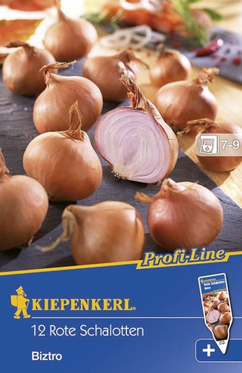 Vrtnarstvo Breskvar - Allium cepa Biztro