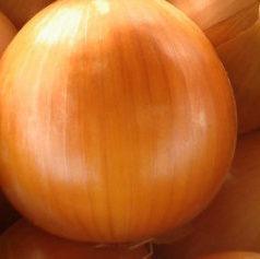 Vrtnarstvo Breskvar - Allium cepa Bela Krajina