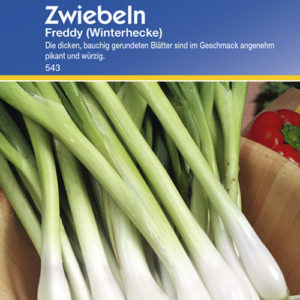 Vrtnarstvo Breskvar - Allium cepa Freddy