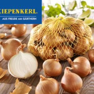 Vrtnarstvo Breskvar - Allium cepa Golden Gourmet