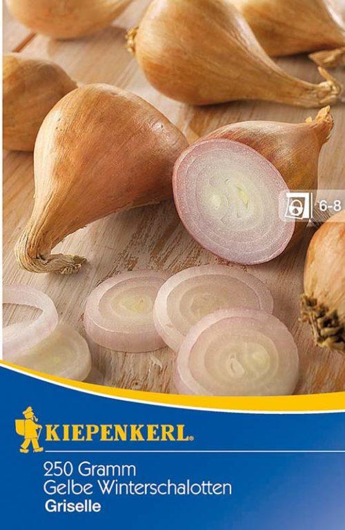 Vrtnarstvo Breskvar - Allium cepa Griselle