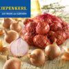 Vrtnarstvo Breskvar - Allium Cepa Sante
