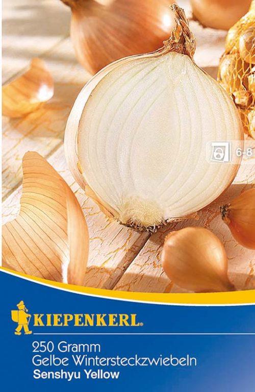 Vrtnarstvo Breskvar - Allium cepa Senshyu Yellow