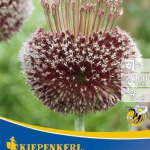 Vrtnarstvo Breskvar - Allium Forelock