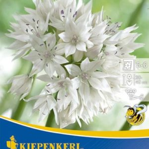 Vrtnarstvo Breskvar - Allium Graceful Beauty