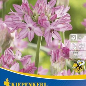 Vrtnarstvo Breskvar - Allium oreophilum