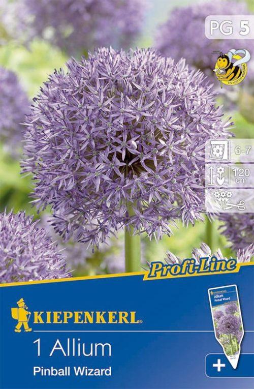 Vrtnarstvo Breskvar - Allium Pinball Wizard