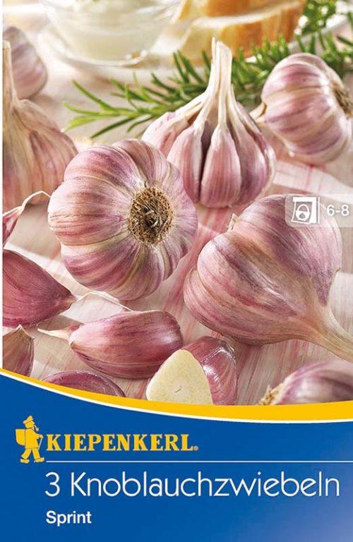 Vrtnarstvo Breskvar - Allium sativum Sprint