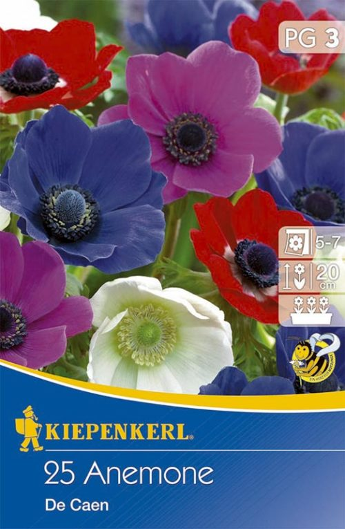 Vrtnarstvo Breskvar - Anemone De Caen Mix