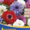 Vrtnarstvo Breskvar - Anemone St Brigid