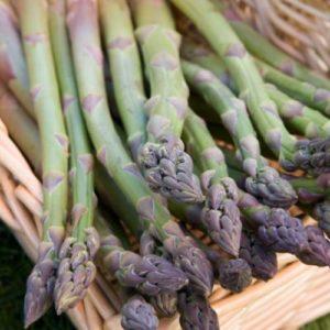 Vrtnarstvo Breskvar - Asparagus officinalis Mondeo F1