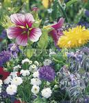 Vrtnarstvo Breskvar - Bee Forage Plants
