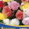 Vrtnarstvo Breskvar - Begonia Gefüllte Mix XXL