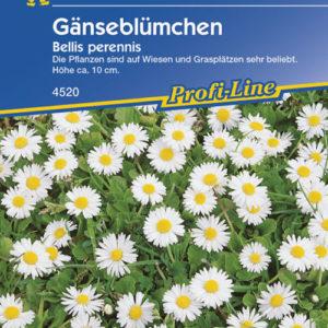 Vrtnarstvo Breskvar - Bellis perennis