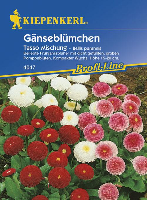 Vrtnarstvo Breskvar - Bellis Perennis Tasso Mix
