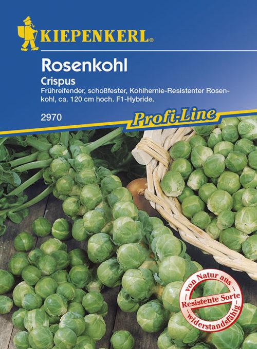Vrtnarstvo Breskvar - Brassica oleracea gemmifera Crispus