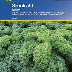 Brassica oleracea sabauda Kadett