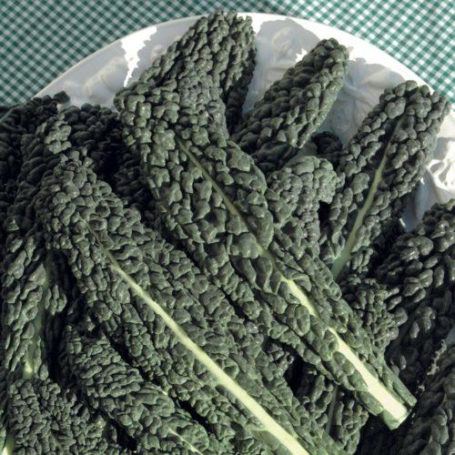 Vrtnarstvo Breskvar - Brassica oleracea sabauda Toscana F1