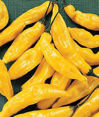 Vrtnarstvo Breskvar - Capsicum annuum Hot Lemon