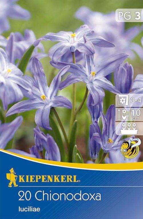 Vrtnarstvo Breskvar - Chionodoxa luciliae
