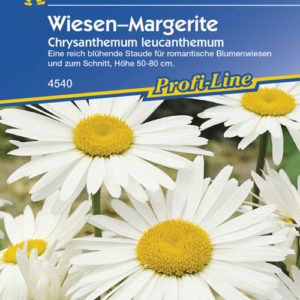 Vrtnarstvo Breskvar - Chrysanthemum leucanthemum