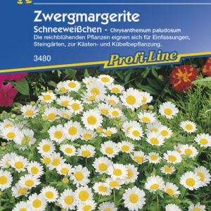 Vrtnarstvo Breskvar - Chrysanthemum paludosum Schneeweisschen