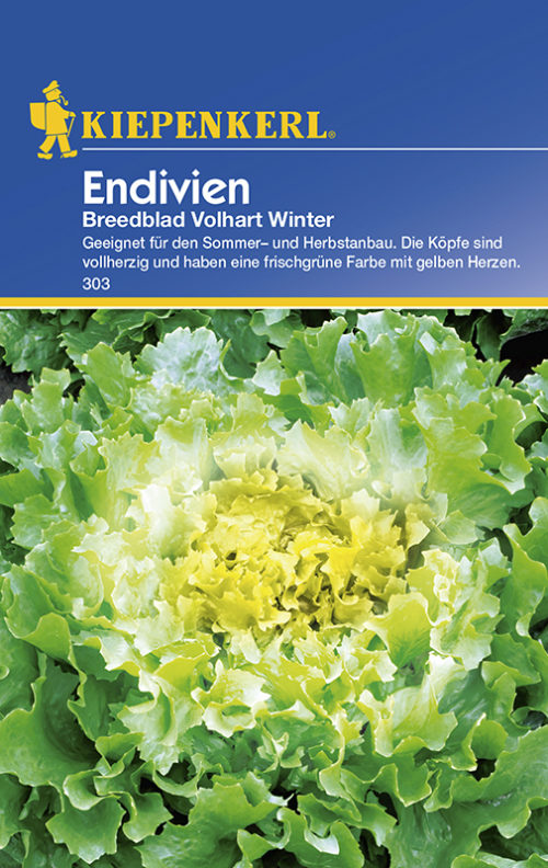 Vrtnarstvo Breskvar - Cichorium endivia Breedblad