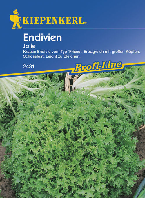 Vrtnarstvo Breskvar - Cichorium endivia Jolie