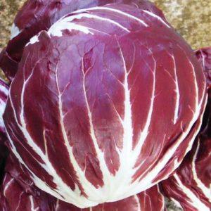 Vrtnarstvo Breskvar - Cichorium Intybus Palla Rosa 2