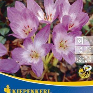 Vrtnarstvo Breskvar - Colchicum Lilac Wonder