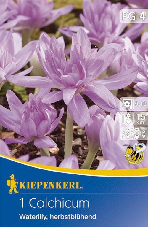 Vrtnarstvo Breskvar - Colchicum Waterlily