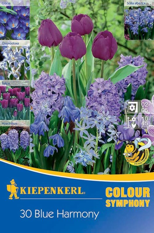 Vrtnarstvo Breskvar - Color Symphony Blue Harmony