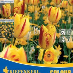 Vrtnarstvo Breskvar - Color Symphony Color Harmony