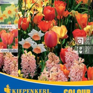 Vrtnarstvo Breskvar - Color Symphony Orange Harmony