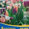 Vrtnarstvo Breskvar - Color Symphony Pastel Celebration